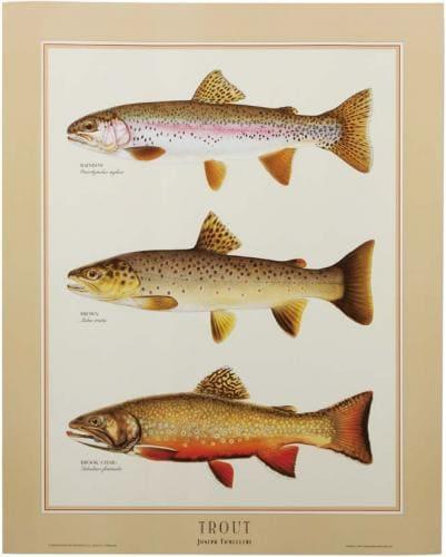 fiiiiish chart poster trout identification ストリームトレイル