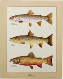 Fiiiiish Chart Poster TROUT IDENTIFICATION
