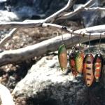 色鮮やかな様々な種類のルアー|礒野寛之の釣り日記Part10